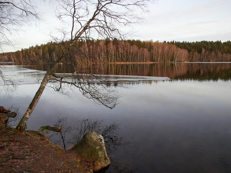 Snowless winter lakescape. Snowless trees by the lake in the winter in the Aulanko nature park in Hameenlinna, Finland. Sunny snowless finter forest on the stock image