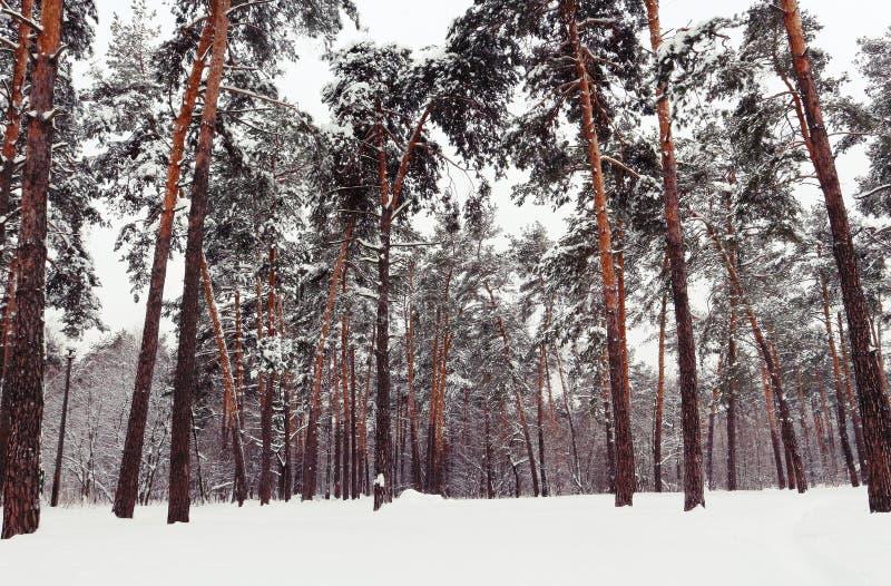 Snowly träd i storstaden royaltyfria bilder