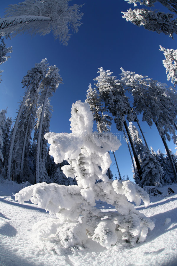 Download Snowman stock photo. Image of wintertime, winter, alps - 1707306