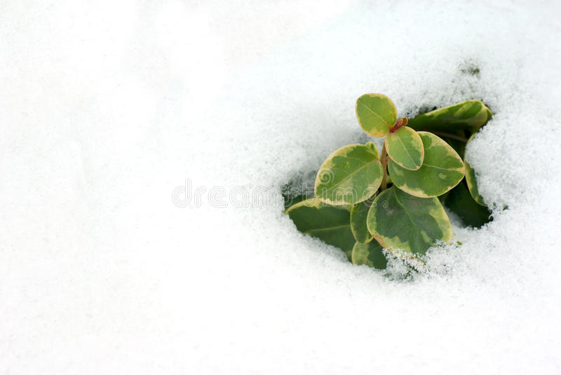 Download Snowmelt stock image. Image of green, plant, growing - 18345663