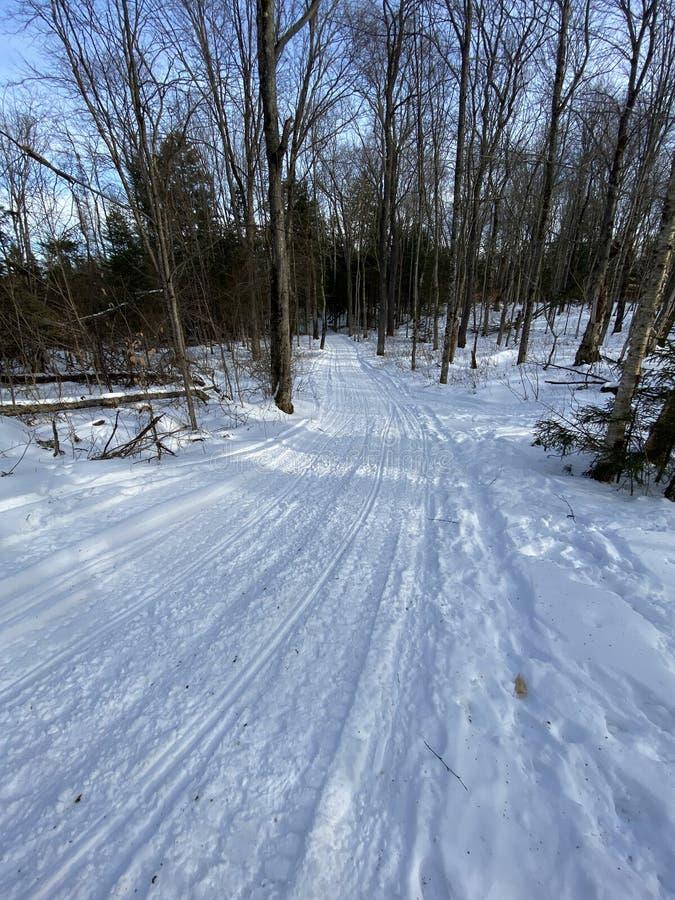 Snowmobile spår genom träden arkivfoto