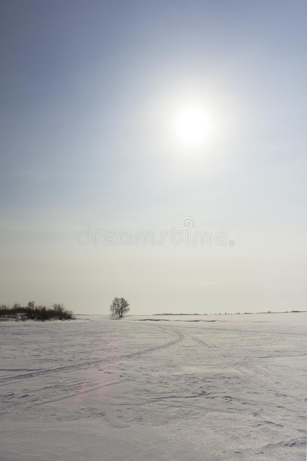 Snowmobile trail in winter snow desert with dry bush and tree under the blue sky with the sun stock photography