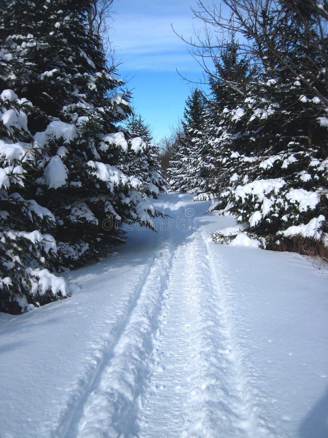 Snowmobiling backcountry stock afbeeldingen
