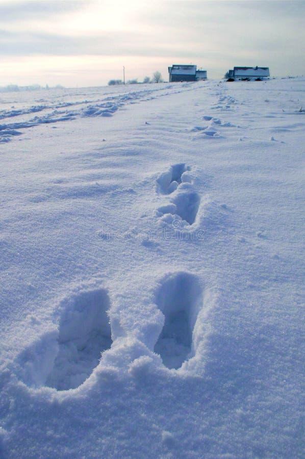 snowmoment royaltyfri fotografi