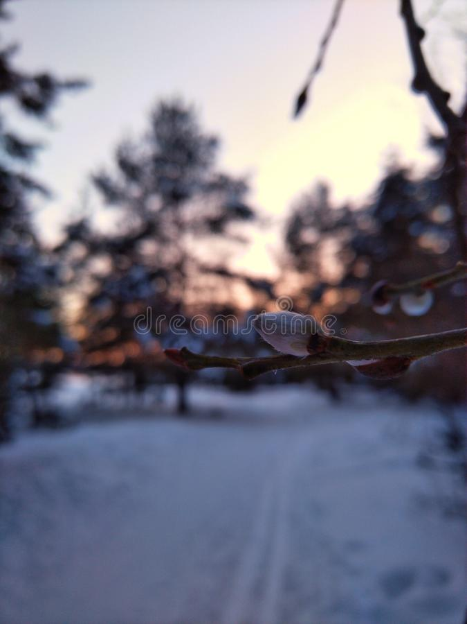 snowroad fotografia stock
