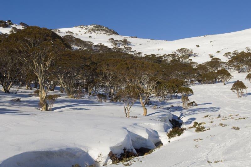 Snowscape australiano imagem de stock royalty free