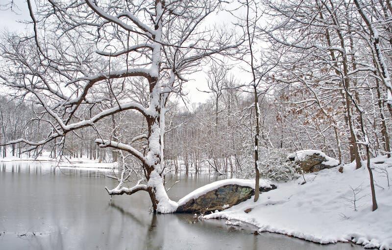 Snowscape d'hiver par le lac image libre de droits