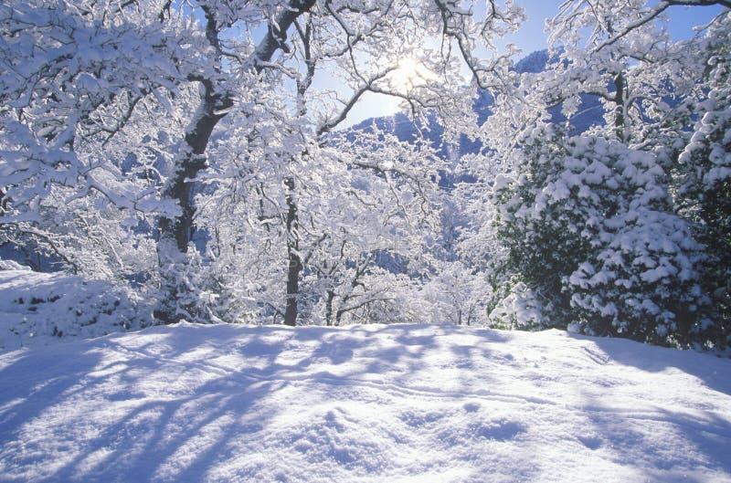 Snowscape, Mammutbaum-Nationalpark, Kalifornien stockfotografie