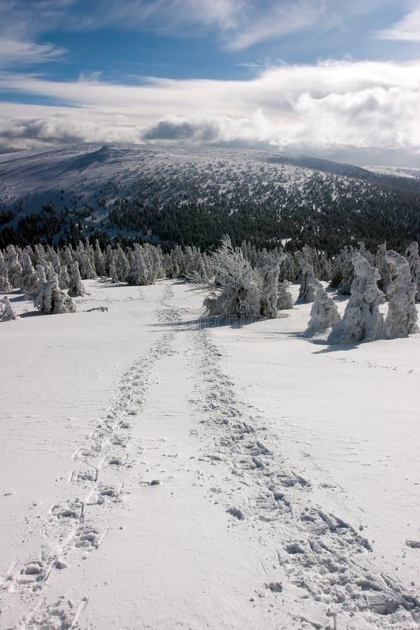 Snowshoe-Abdrücke auf Snowy-Ebene am sonnigen Tag stockbild