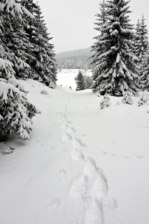 Snowshoe-Abdrücke im Winter-Wald stockfotografie