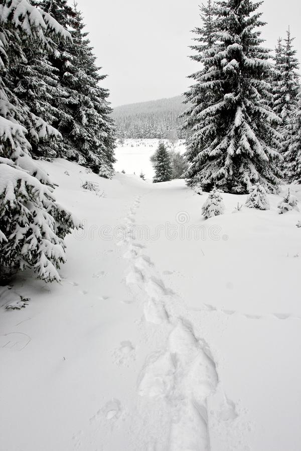 Download Snowshoe Footprints In Winter Forest Stock Photography - Image: 28093872