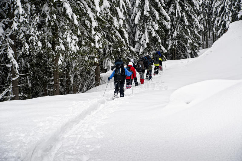 Download Snowshoe hikers stock photo. Image of landscape, cold - 23108460