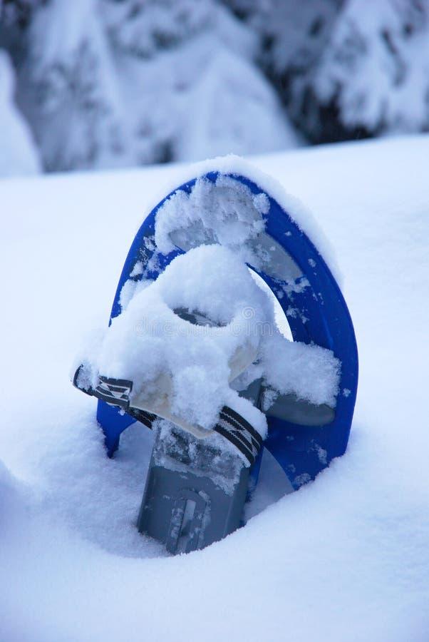 Snowshoe im Schnee lizenzfreies stockfoto