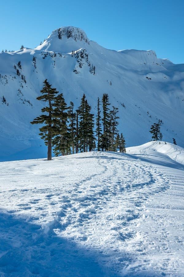 Snowshoe-spår och snötäckta berg nära Mt Baker, WA arkivbild