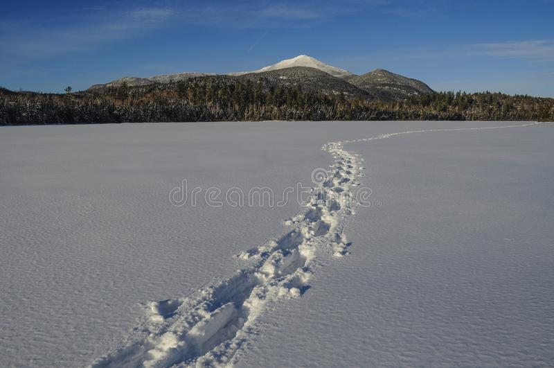 Snowshoe Tracks Across Connery Pond With Whiteface Mountain In T. Snowshoe tracks Across Connery Pond, Adirondack Forest Preserve, New York royalty free stock photo
