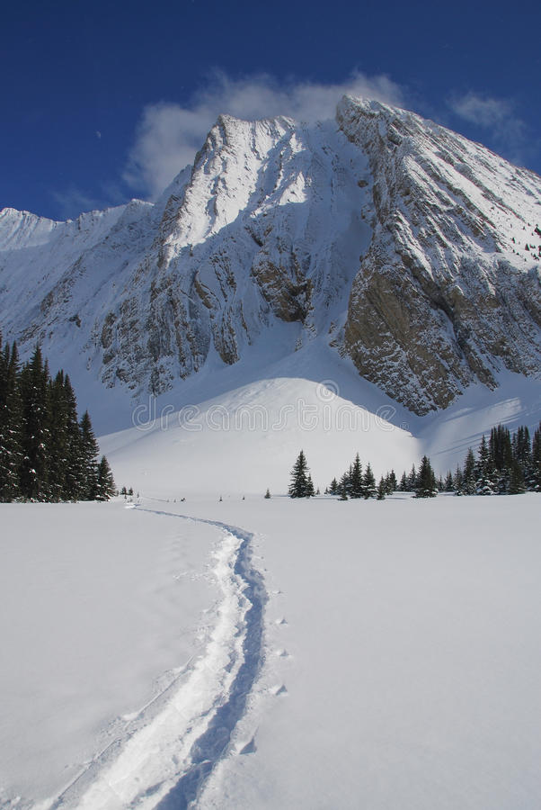 Snowshoe tracks in the Canadian Rockies royalty free stock images
