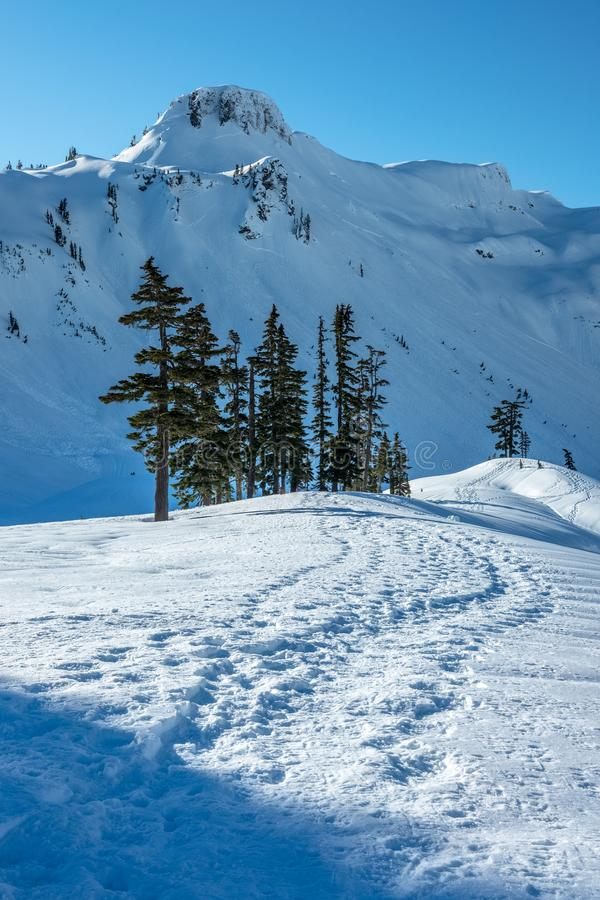 Snowshoe tracks and snow-covered mountains near Mt Baker, WA. Snowshoe tracks zig-zag towards a group of conifer trees and a steep, snow-covered mountainside stock photography