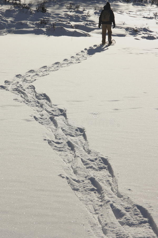 Snowshoe Trails 1 Stock Images
