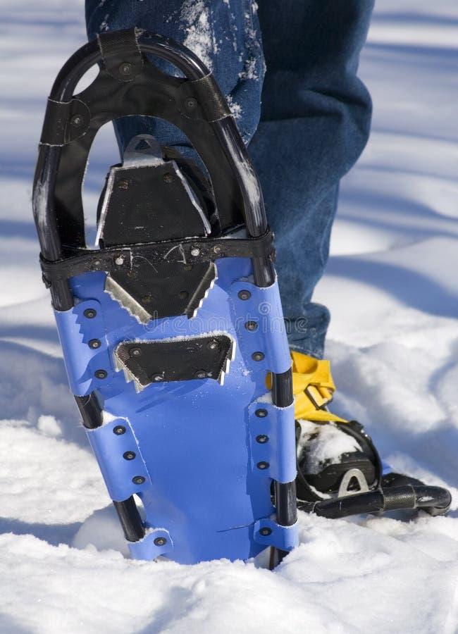 Snowshoe-Unterseite stockbilder