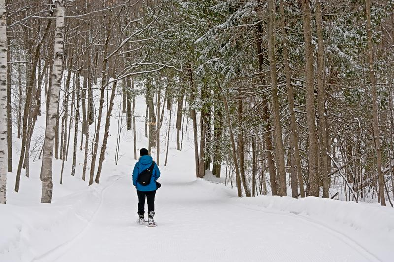 Snowshoe hiker on a throug a bare winter forest royalty free stock photography