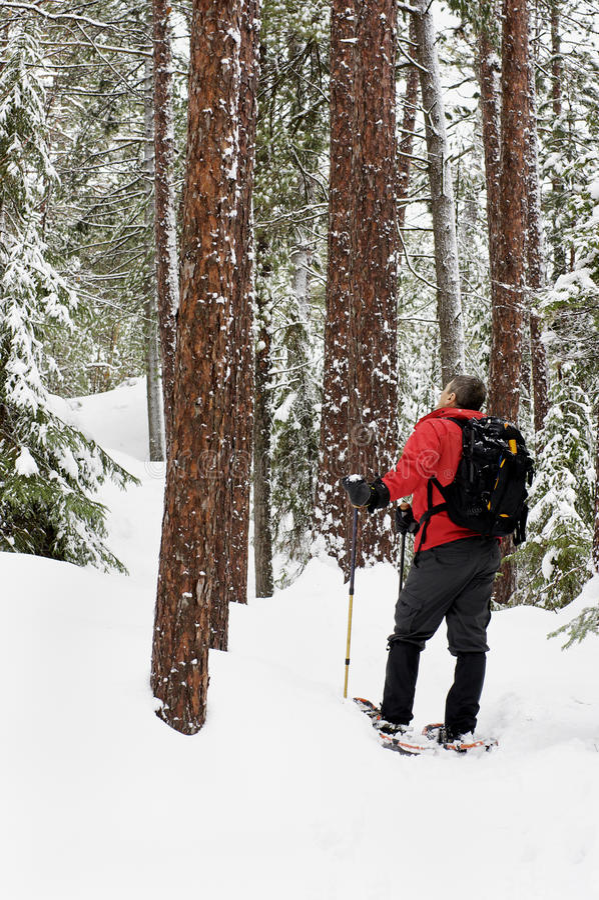 Snowshoeing -基拉尼,安大略 库存照片