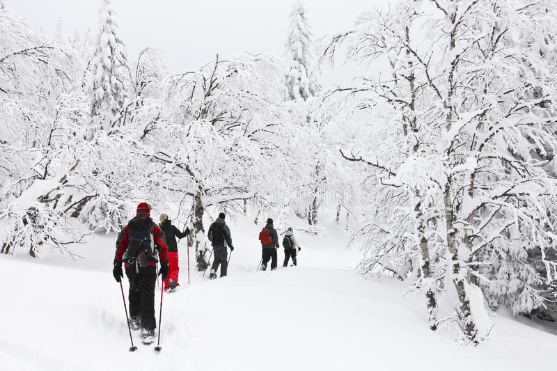 Download Snowshoeing in a forest stock photo. Image of walking - 29151824