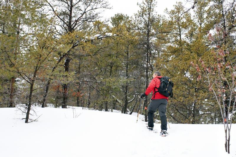 Snowshoeing in het Provinciale Park van Killarney, Ontario royalty-vrije stock foto