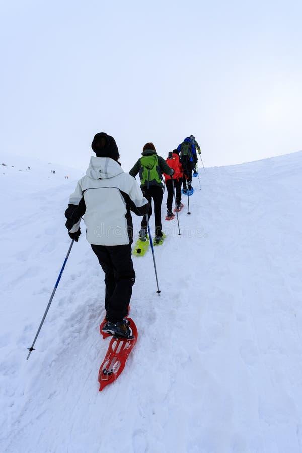 Snowshoeing na neve fotografia de stock royalty free