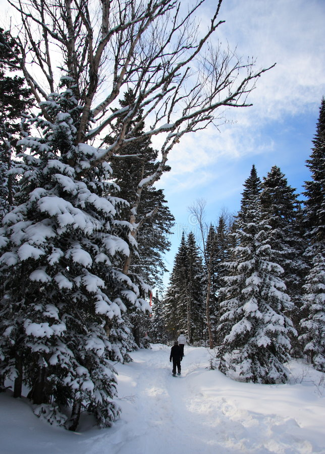 Download Snowshoeing In Winter Landscape Stock Image - Image: 7851417