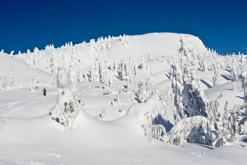 Download Snowshoeing In Winter Wonderland Stock Photo - Image: 22758464