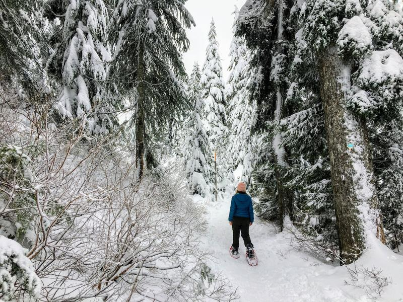 A snowshoer walking and admiring the stunning beauty of the winter landscape on Cypress Mountain stock images