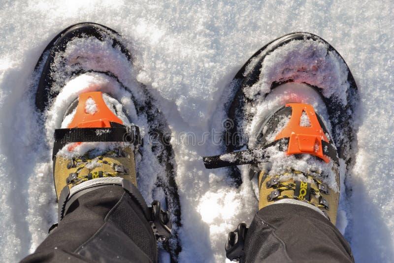 snowshoes royaltyfri bild