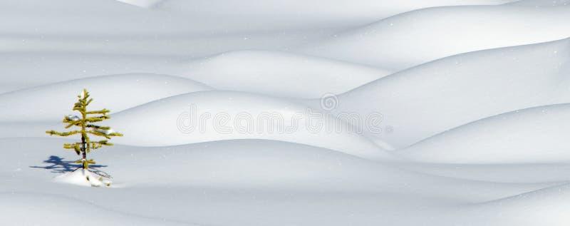 snowspruce arkivfoto