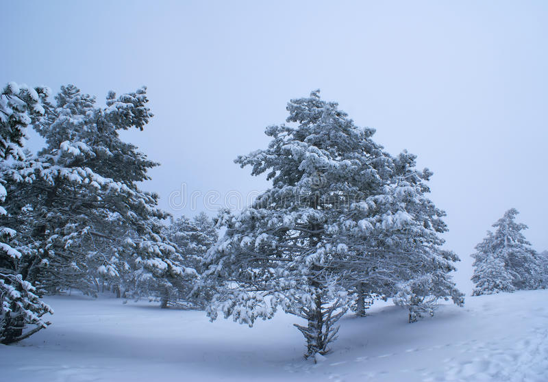 Download Snowstorm stock photo. Image of outdoor, background, park - 12103914
