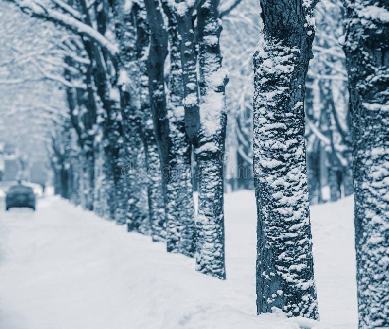 snowstorm fotografía de archivo
