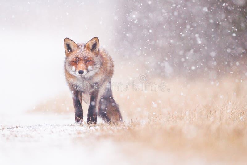 snowstorm photo libre de droits