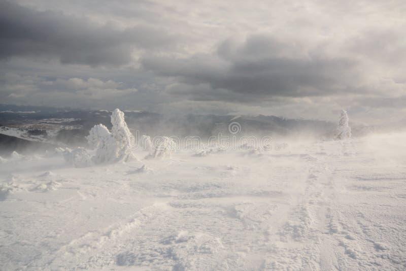 Snowstorm. Carpathian, Ukraine. Fantastic winter landscape. Carpathian, Ukraine. Beauty snow world stock photos
