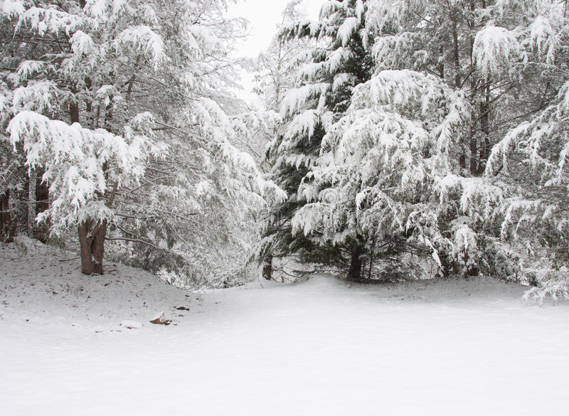 Snowstorm in Chattahoochee National Forest royalty free stock images