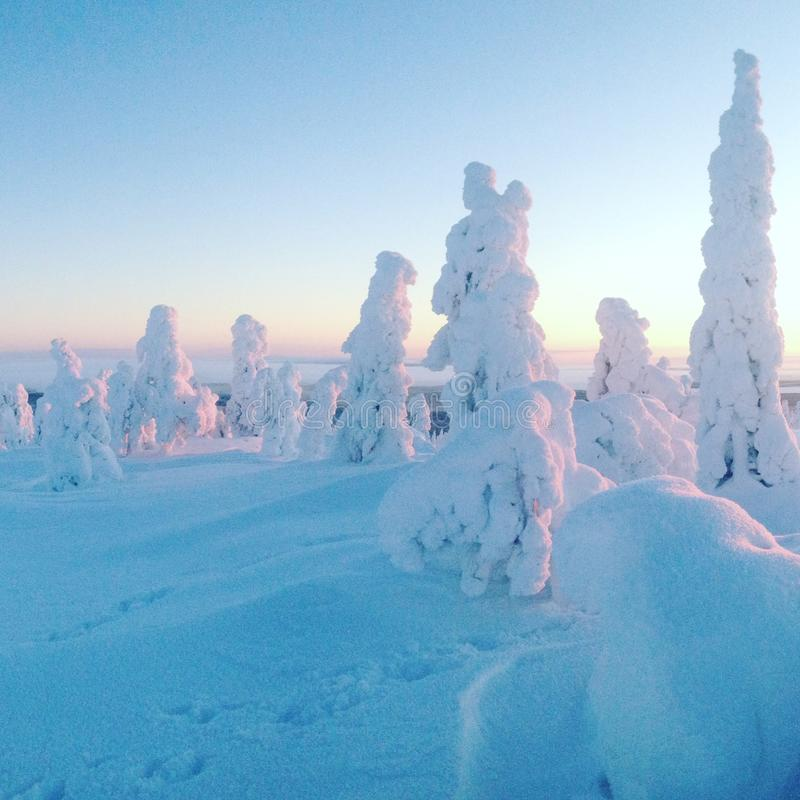 Snowthrees stock photo