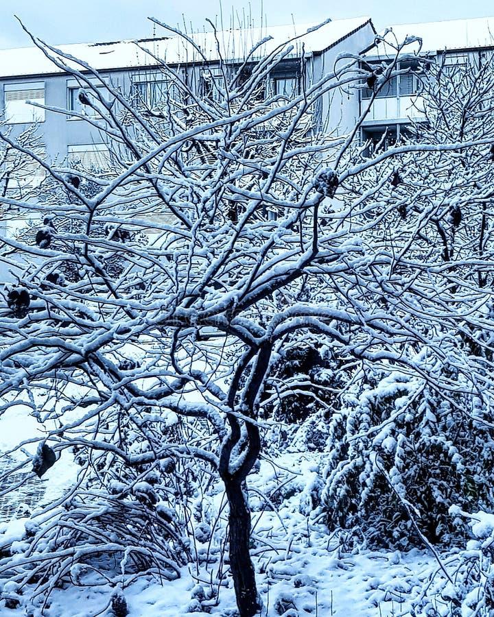 Snowtree foto de stock