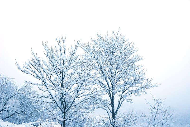 snowtrees arkivfoto