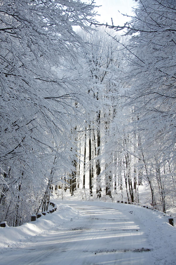 Download Snowy alley stock image. Image of natural, seasonal, january - 22442145