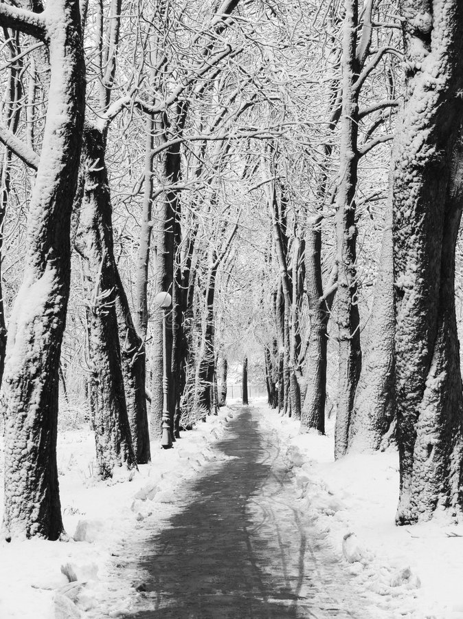 Download Snowy alley stock image. Image of forest, season, beautiful - 462665