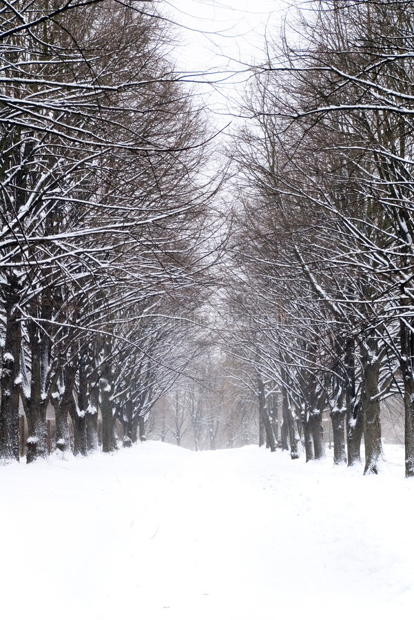 Download Snowy alley in the park stock image. Image of quiet, road - 1854241