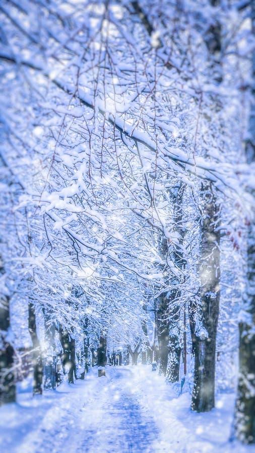 Snowy alley in Poprad royalty free stock image