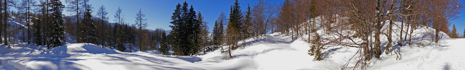 Snowy alpine forest panorama stock images