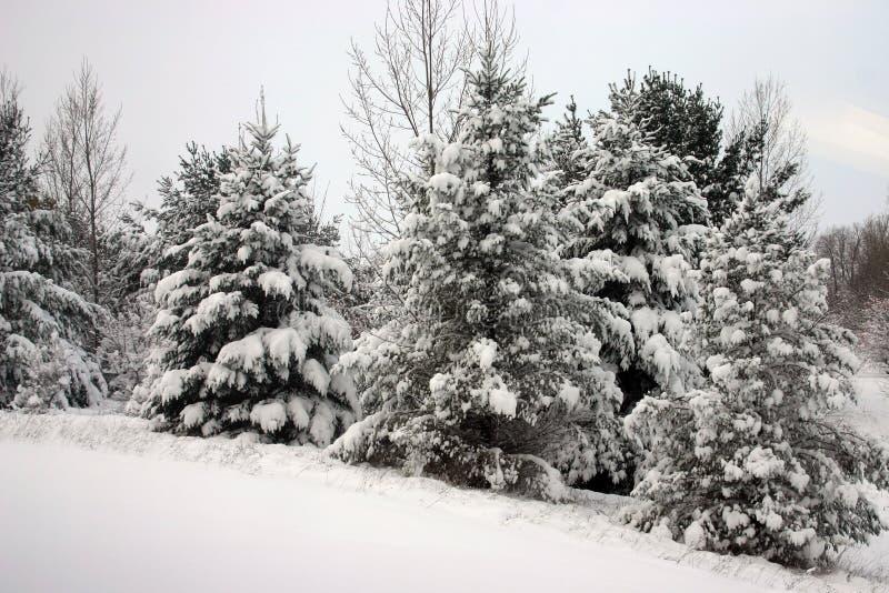 Snowy-Bäume stockbild