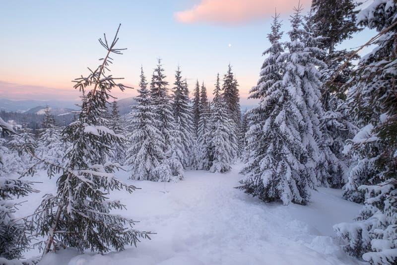 Snowy-Bäume an den Wintergebirgshügeln stockbild