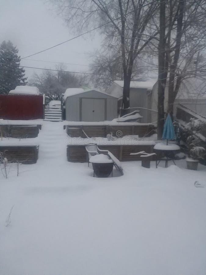 Snowy Backyard stock foto's