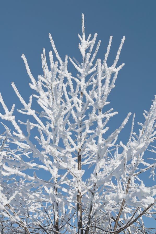 Snowy-Baum lizenzfreies stockfoto